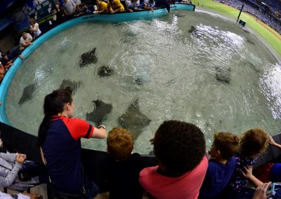 Tropicana Field, Stingray Touch Pool