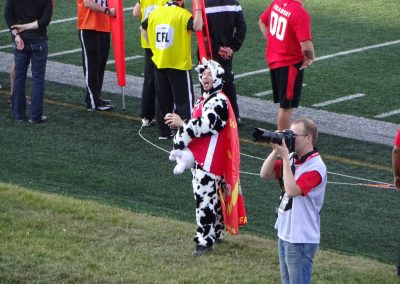 McMahon Stadium, World's Fastest Cow tossing footballs to the crowd
