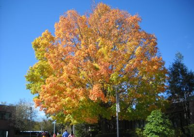 Campus Field, Fall in Connecticut