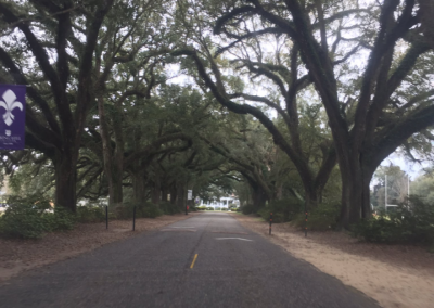 Stan Galle Field, View of the Avenue of the Oaks coming into Campus